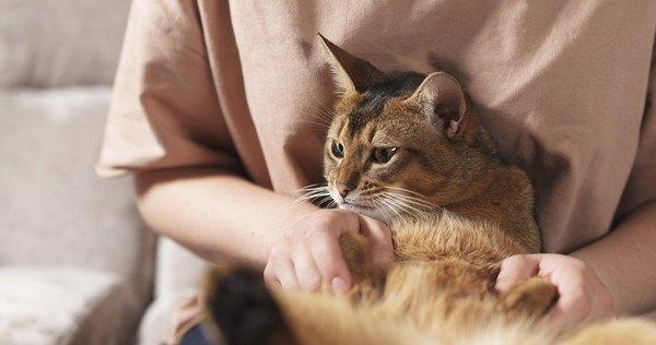 猫がお腹を見せてきたら触ってもいい?撫でる時の注意点5つ