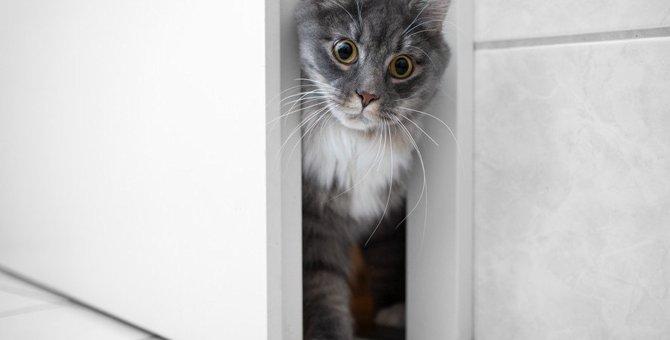 猫は『留守番』するとストレスになる?帰宅後に飼い主がすべき3つのケア