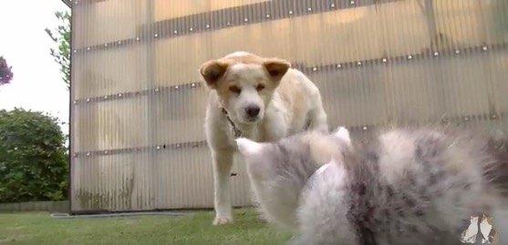 子猫が初めて犬と出会った!果たして反応は?