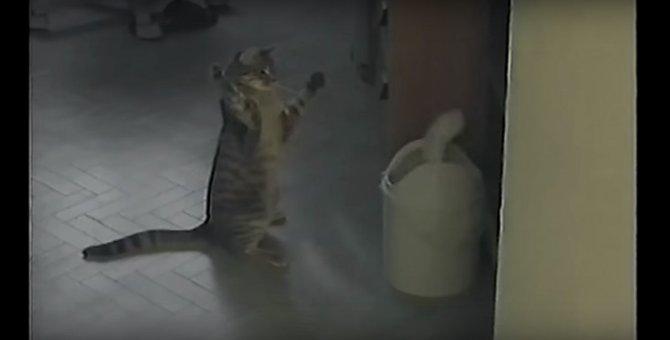 猫VSゴミ箱!もてあそばれる猫ちゃんが可愛い