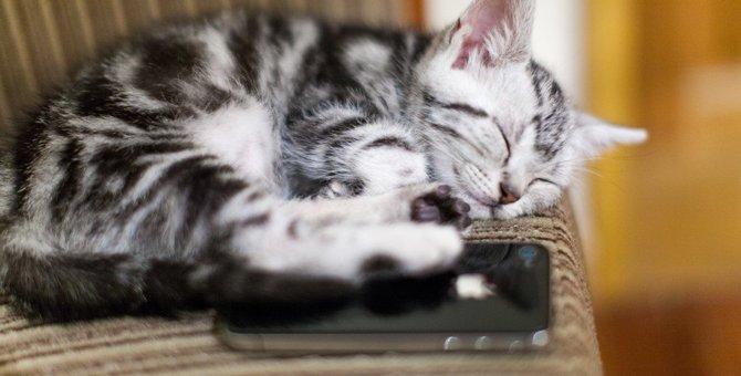 なぜそこで寝る?猫が寝る場所あるある7選