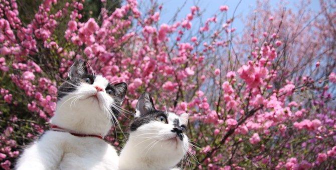 猫と春を感じる画像18選