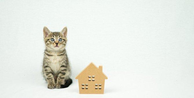 新築の家で猫を飼うためのポイントと注意点