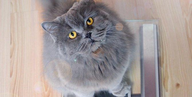 ストレスなし!猫の上手なダイエット方法5つ