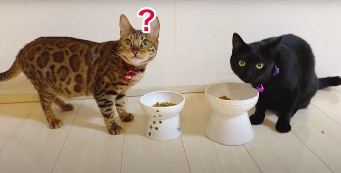 前より仲良しに♡楽しそうに遊んだりごはんを一緒に食べるボス猫さんと黒猫さん!