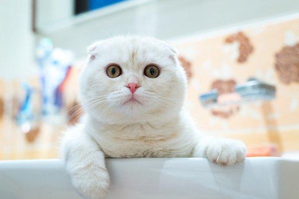 猫のうんちをトイレに流すのは大丈夫?3つの注意点と対処法