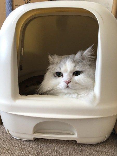 猫トイレの『NGな設置場所』5つ
