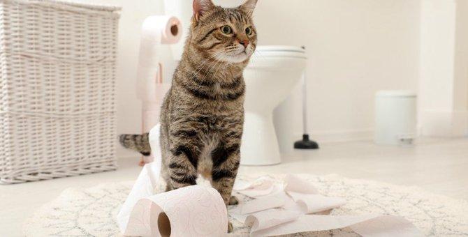 猫がトイレ以外で排泄してしまう原因と対策