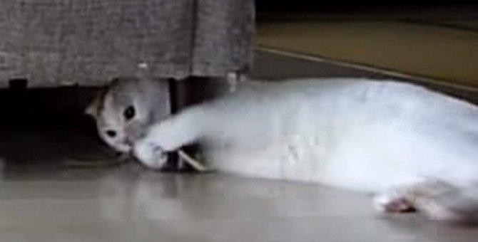 スイッチが入って激しく遊ぶ猫さん!