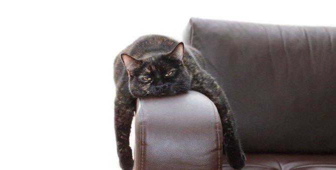 そんな体勢で大丈夫?人間には理解できない猫の変な寝方7連発!