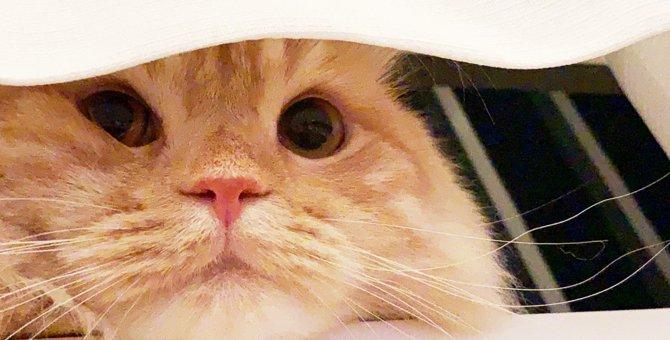 Laylaの12猫占い 10/21~10/27までのあなたと猫ちゃんの運勢