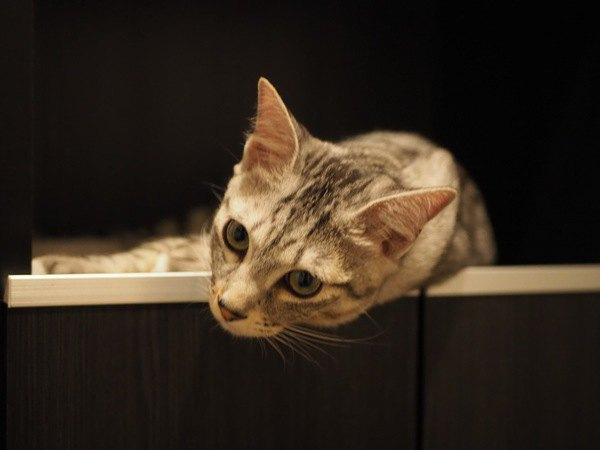 猫が寂しかった留守番後にする行動5つ