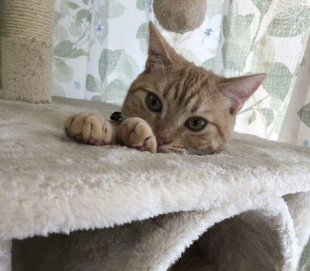 愛猫を『人好き』にする方法5つ