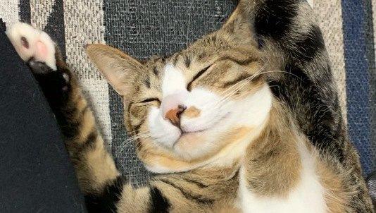 猫が『ずっとくっついていたい』と思う人の特徴5つ