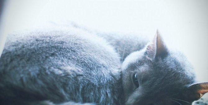 猫の寿命は平均何年?種類による違いや長生きの秘訣