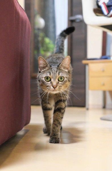 「猫の障害物チャレンジ」が話題!なんで上手に避けられるの?
