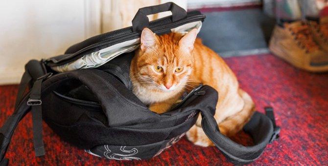 万が一に備えて!室内でできる猫との防災シミュレーション4つ