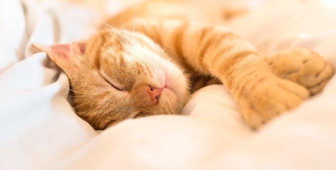 猫が不安を感じる5つの事