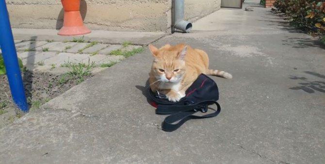 お父ちゃんを会社に行かせまいと抗議する猫ちゃん