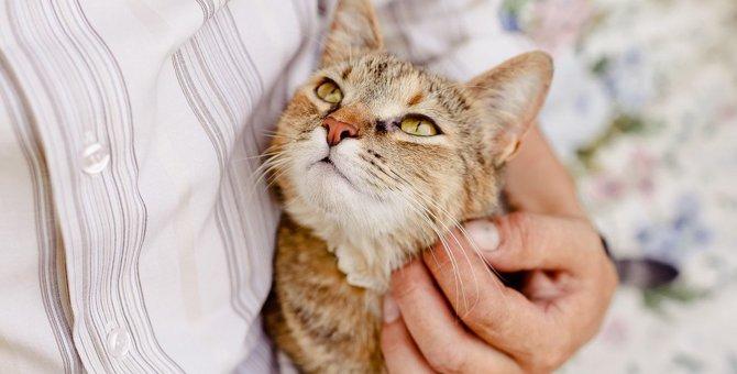 猫が人に『感謝しているとき』に見せる仕草3選