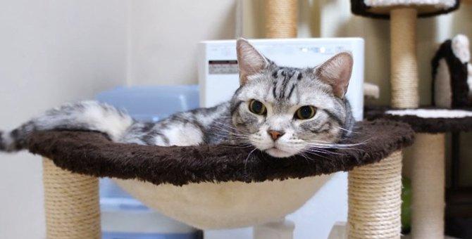 ブラッシングは歓迎だけど体重測定は拒否したい猫ちゃん