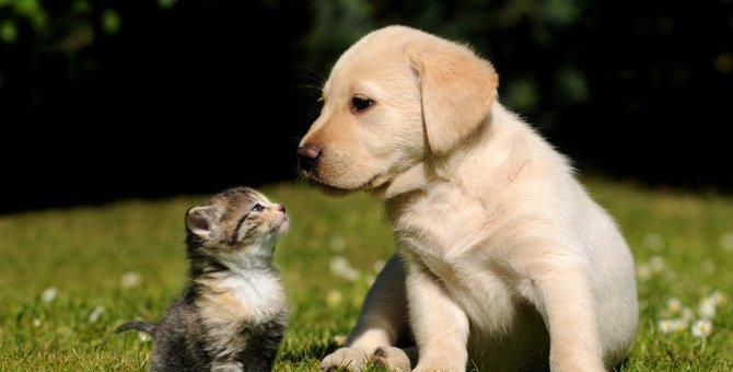 猫は他の動物と飼っても平気?ネコと5つの動物で比較