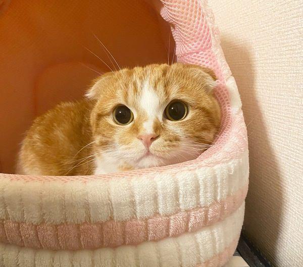 猫ベッドの設置に最適な場所とは?5つの条件