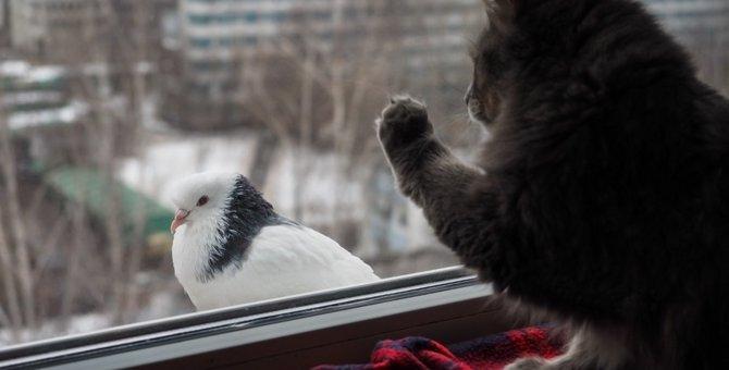 猫のクラッキングとは 「カカカ」という鳴き声と鳴く意味
