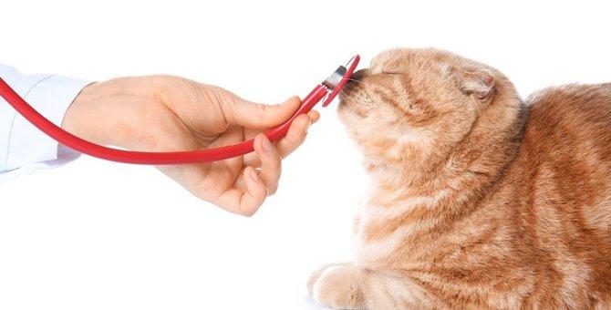 猫の体が『ゆらゆら揺れる』ときに注意すべき病気5つ