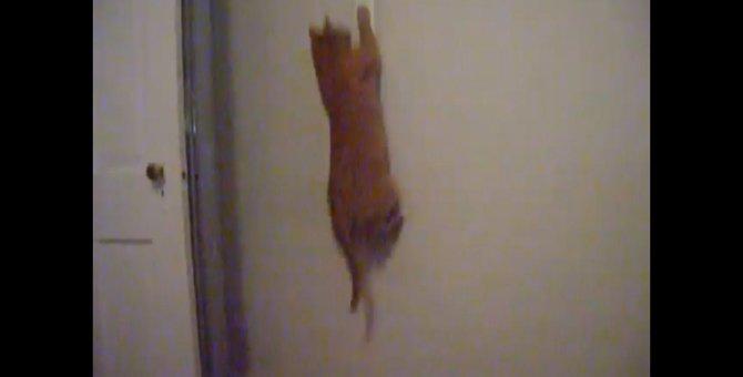 電気の無駄遣いはダメにゃ!節電を徹底する猫ちゃん