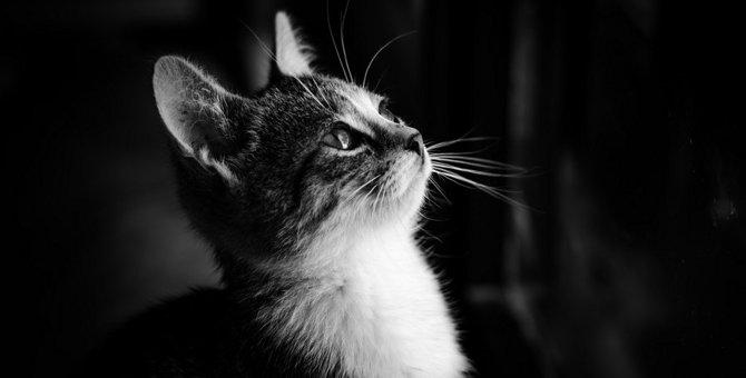 『身勝手な猫の飼い主』がよくするNG行動5つ!猫の精神不安やストレスに繋がるかも?