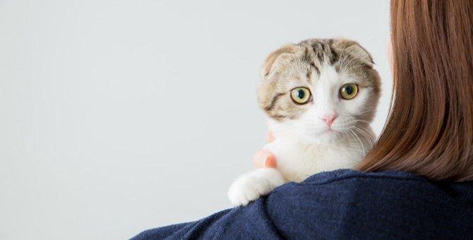 猫が一番好きな人にだけ見せる仕草6つ