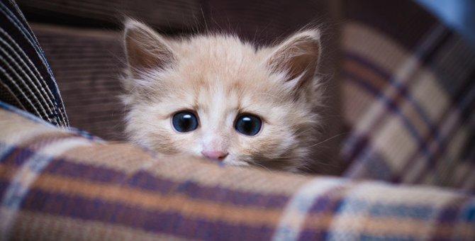 猫に『トラウマ』を克服してもらう方法3つ