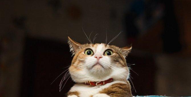 猫にあわびは危険!「耳が落ちる」の言い伝えは本当だった