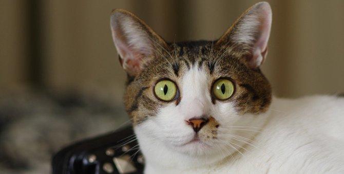 猫が『フリーズ』してしまう瞬間5選