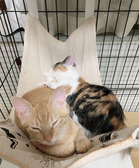 猫との生活に役立つDIY術!快適になる3つの手作りグッズ