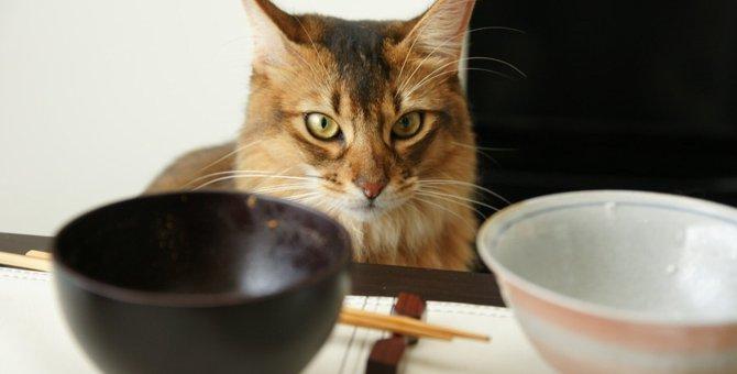 かわいい猫の箸置きおすすめ商品7選!形や素材違いでご紹介