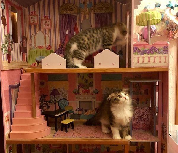 部屋の模様替えをする時、猫に配慮すべきこと5つ