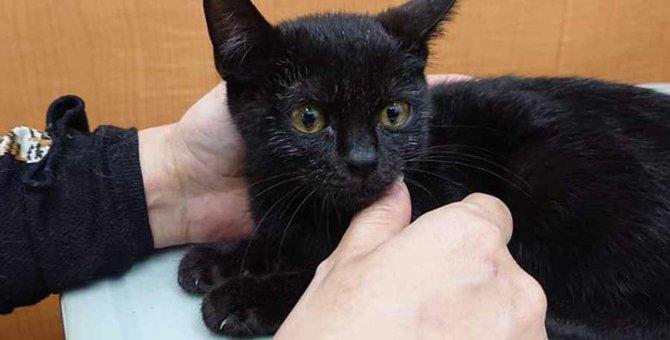 四肢麻痺で命の期限が迫った子猫…救助後に驚きの奇跡が!