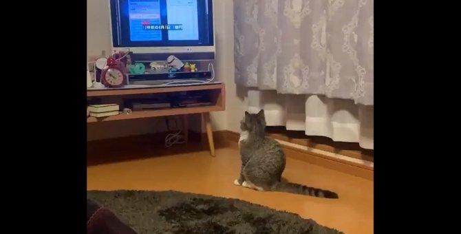 ドラマに夢中な猫さん「千倍返し」の極意を勉強する様子が注目を集める