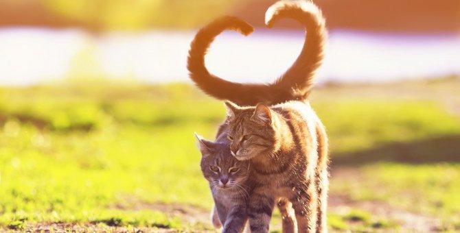 猫の発情期いつから始まるか知ってる?去勢と避妊について解説