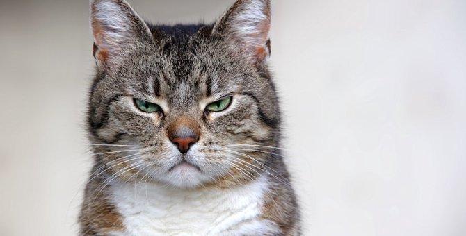 猫が臭いと感じる人の香り7つの特徴