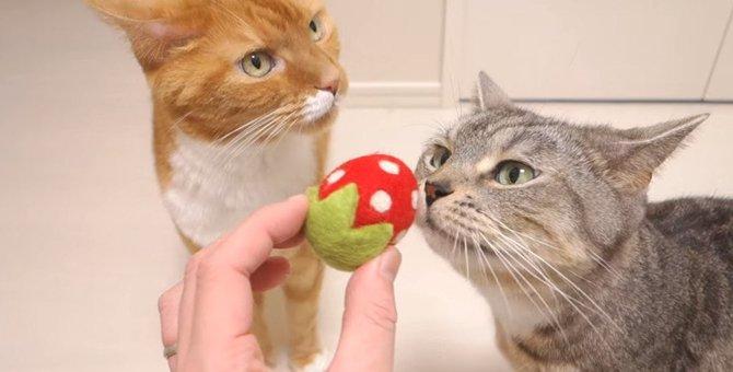 いちご?交互に遊ぶ猫ちゃんたちが可愛い♡