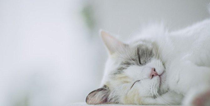 猫の『体内時計』が狂ってしまったときの対策6つ