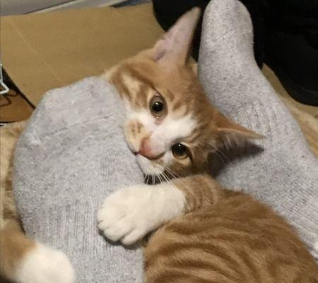 足フェチ?猫が飼い主の靴や靴下を嗅ぐ理由3つ