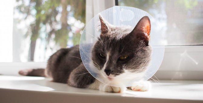 猫の避妊に適した時期
