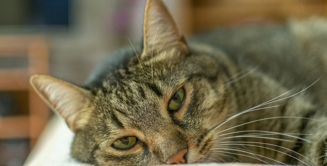 猫が『不健康な状態』になっているときにすること5つ