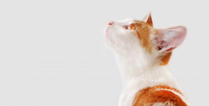 愛猫とのお別れで準備しておく4つのこと