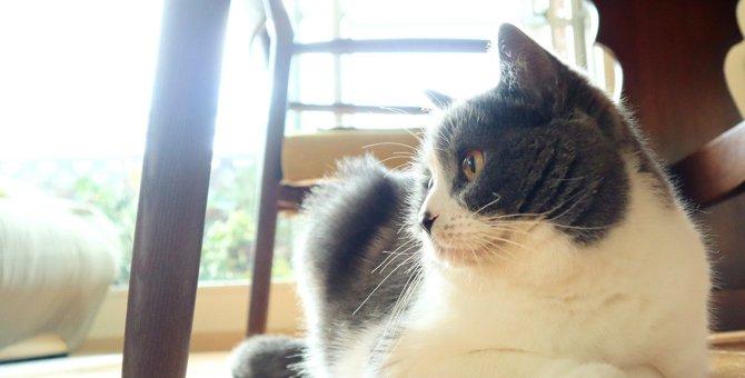 猫が『香箱座り』で眠る3つの意味