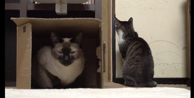 かくれんぼしていた猫ちゃん、しかし全てお見通しだった!